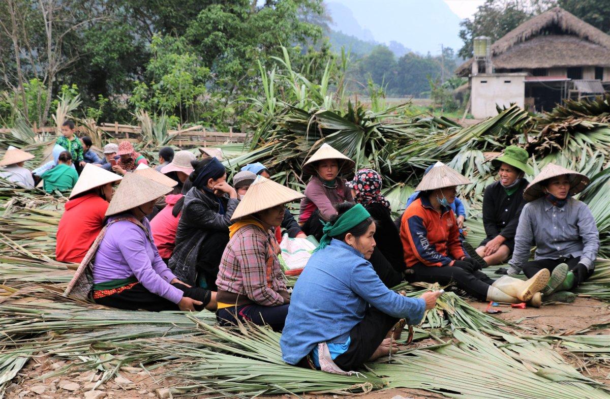Donne nel Vietnam Settentrionale intrecciano foglie di palma